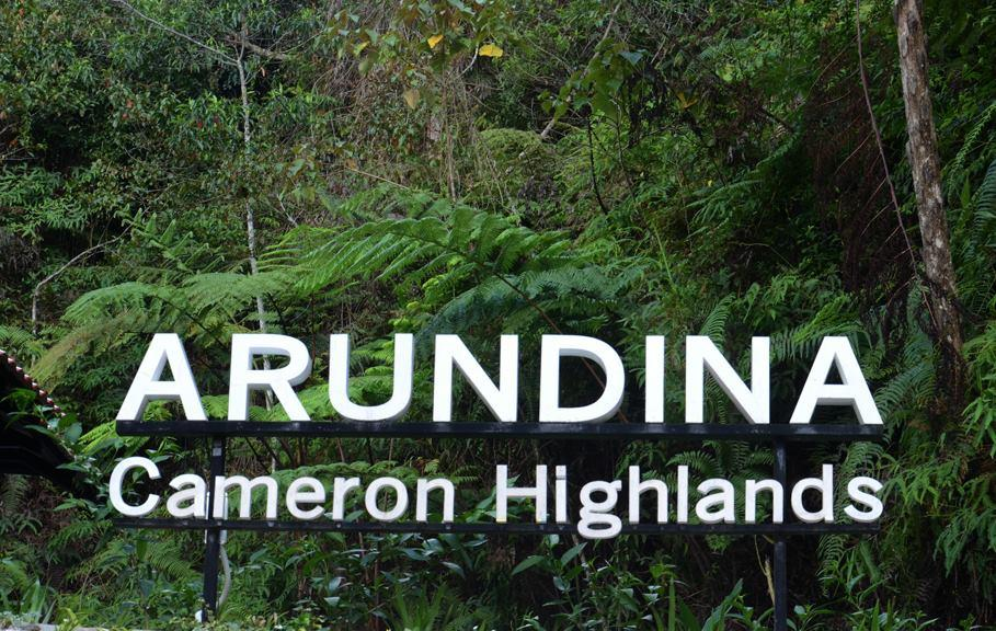 Cameron Highlands Nightlife - What to Do at Night in