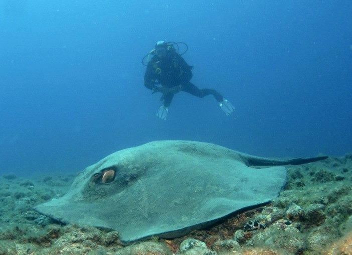 gran canaria diving review