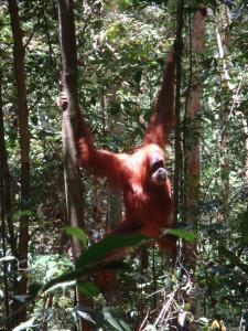Orangutan Expedition - Day Tours