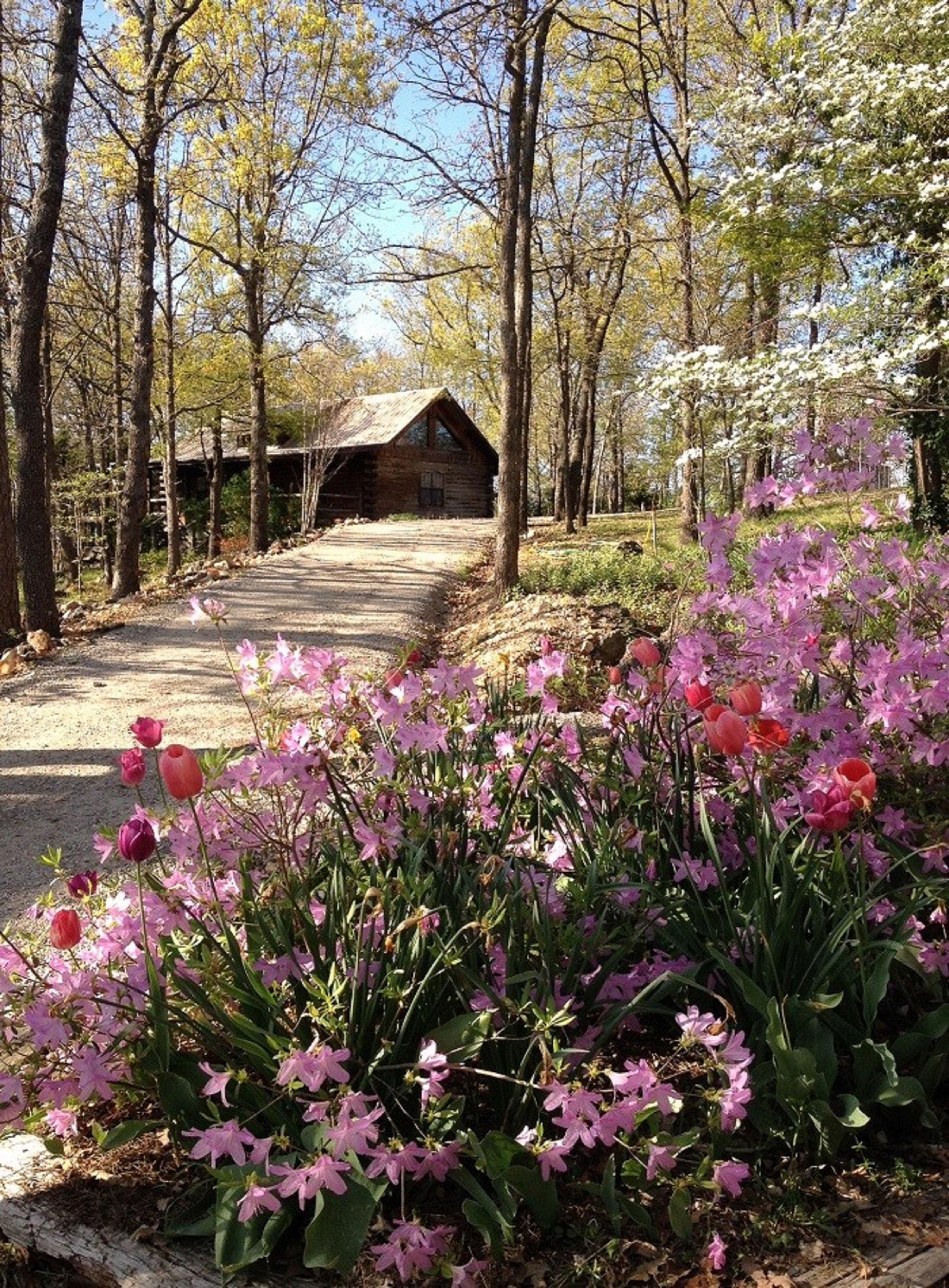Eureka Springs (AR) United States  city photos gallery : Cherokee Mountain Log Cabin Resort Eureka Springs, AR : Lodge Reviews ...
