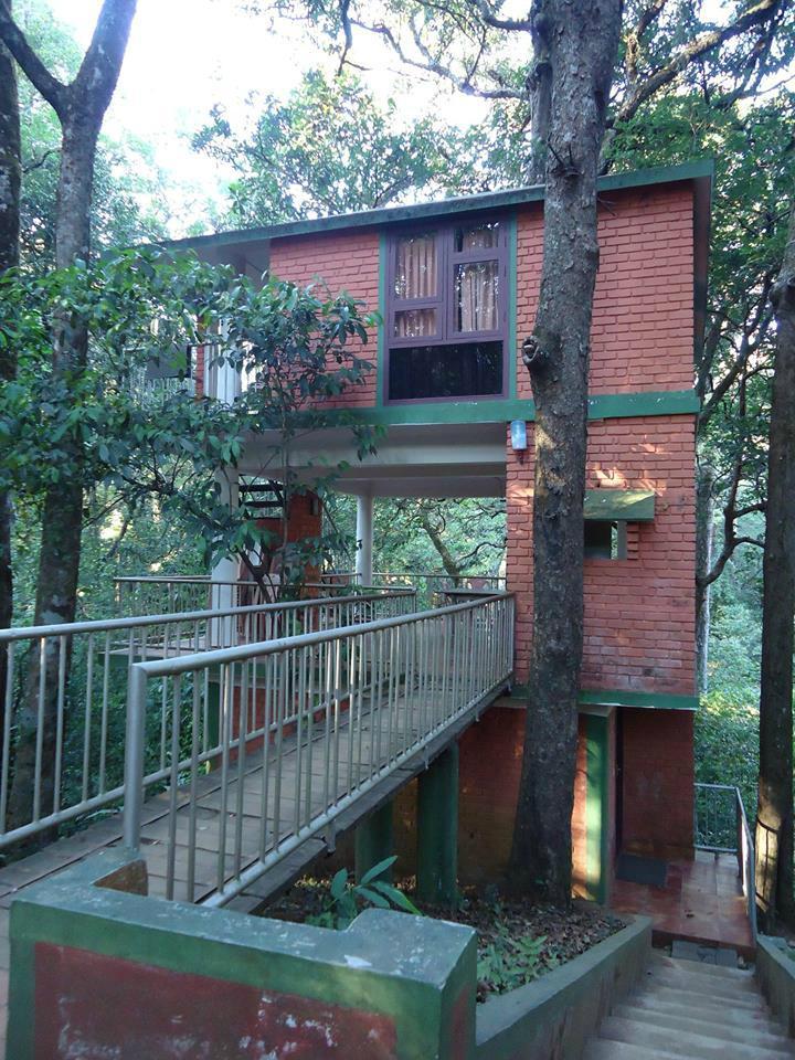 Vagamon Heights: Thankakanam Estate