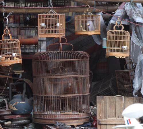 Bird's Market