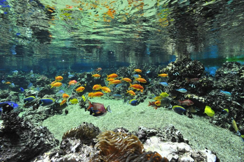 aquarium mare nostrum montpellier top tips before you go with photos tripadvisor