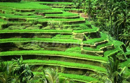 Bali Travel Deal - Private Day Tours