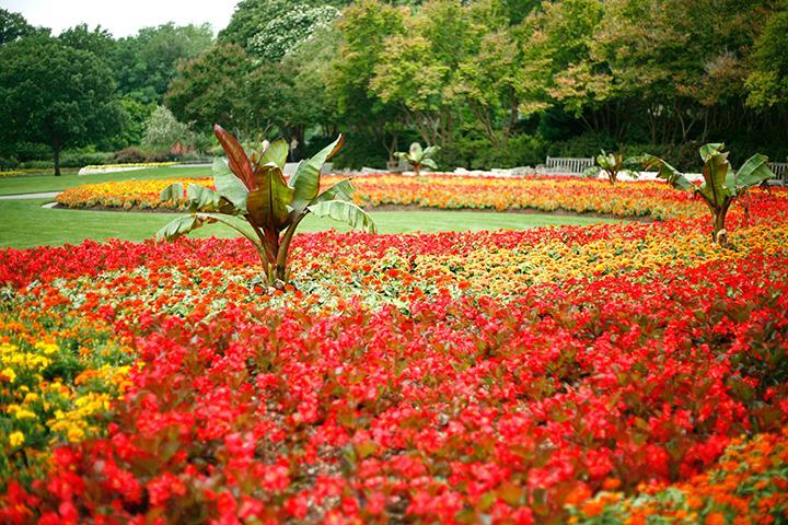 Dallas Arboretum U0026 Botanical Gardens