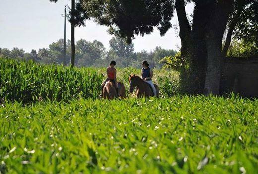 Hugo Crespo - Serviços Equestres, Centro Hipico