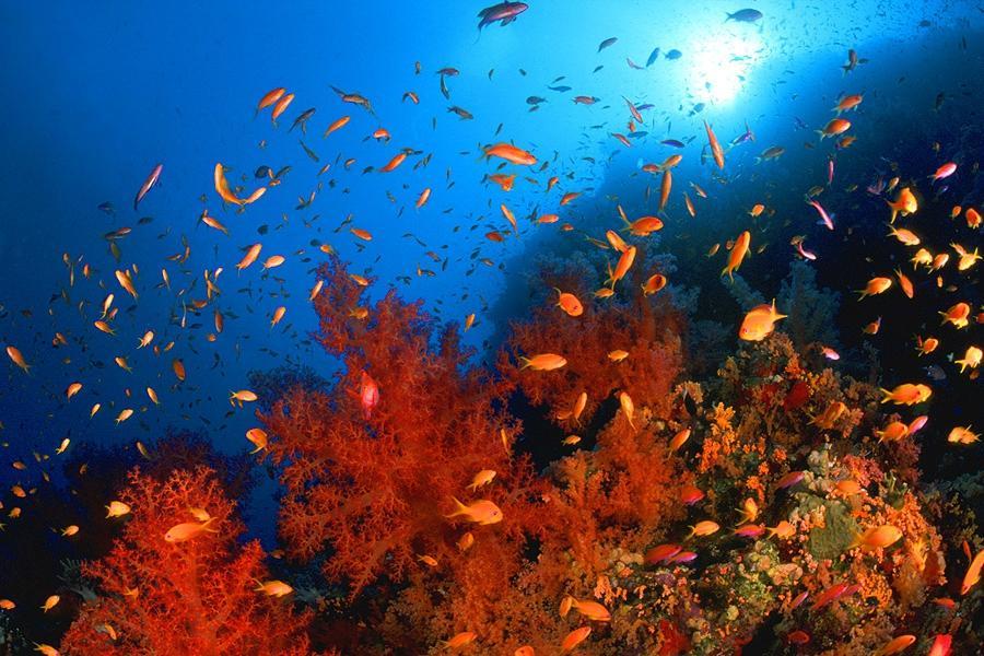 Sinai Divers Diving Center (Sharm El Sheikh, Egypten ...