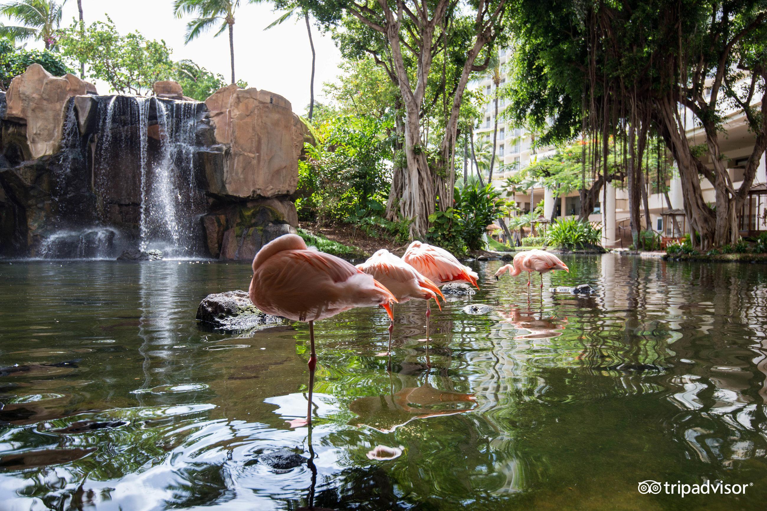 westin maui resort & spa (hi) 2017 review - family vacation critic