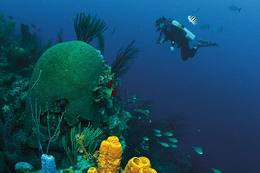Bucket list worthy scuba diving