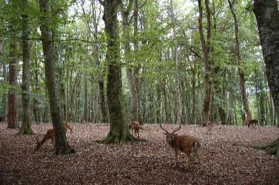 Foresta Umbra