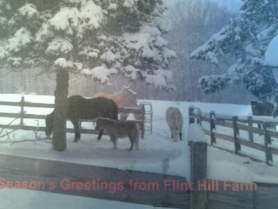 Flint Hill Farmstay