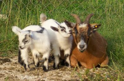 Red Barn Petting Farm