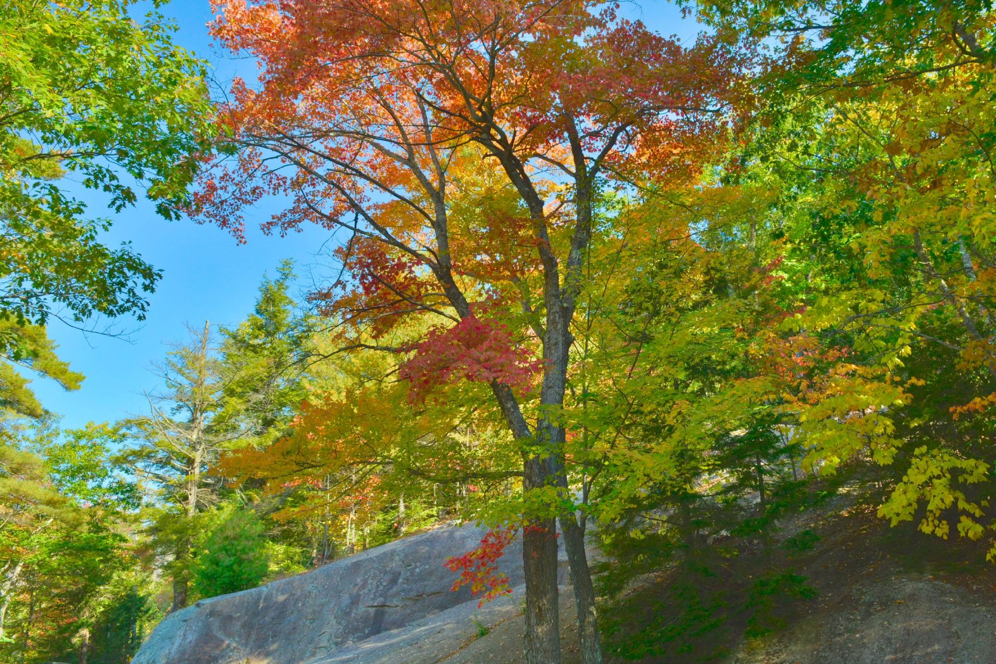 Fall Foliage in the White Mountains is second to none !