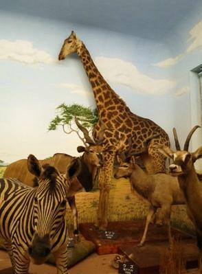 Shiga Safari Museum