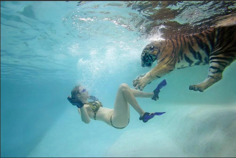 Myrtle Beach Safari