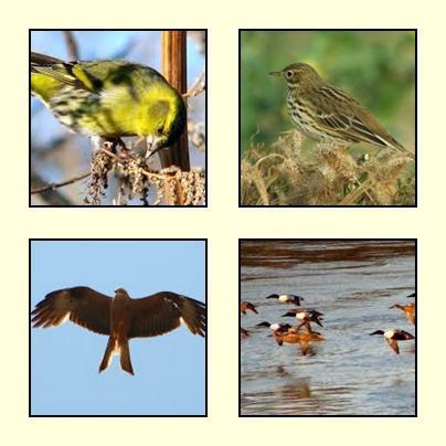 Turismo ornitologico, reserva en Belchite donde se divisan especies difícilmente de verlas