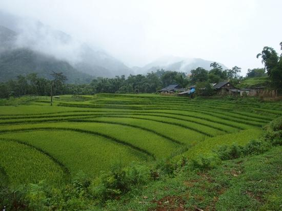 ‪Terraced Rice Fields in Shin Chai Village‬