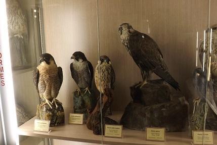 Museo della Fauna Selvatica