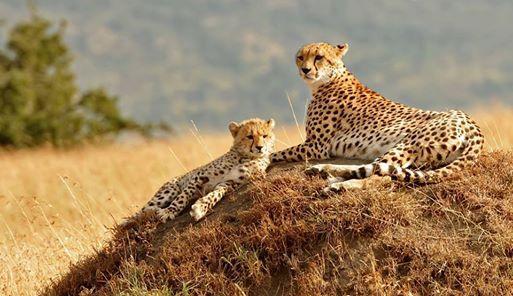 Bigmac Africa Safaris
