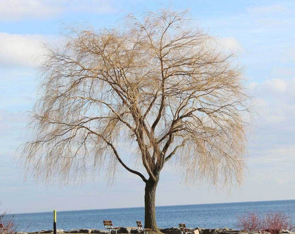 lakefront promenade park mississauga ontario top tips before