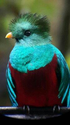 Cabinas El Quetzal