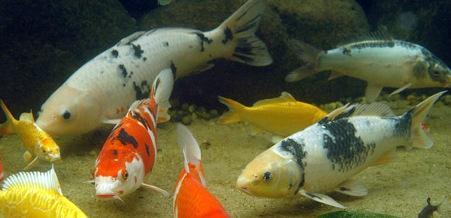 Pocos de Caldas aquarium