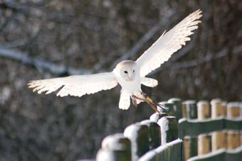Gauntlet Birds of Prey