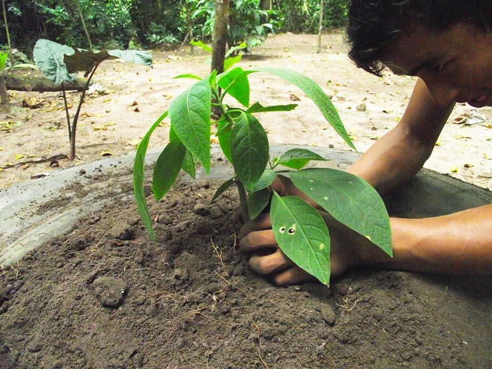 El jardin del wawki tarapoto aktuelle 2017 lohnt es for Jardin 64
