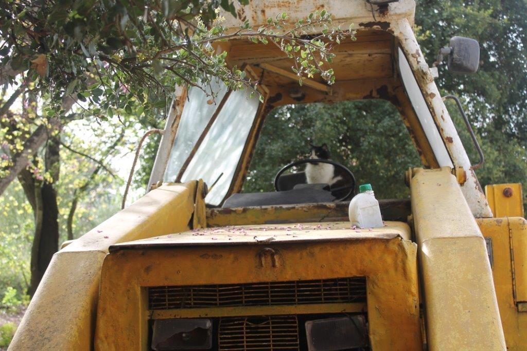 Corfu Donkey Rescue (Paleokastritsa, Greece): Top Tips ...