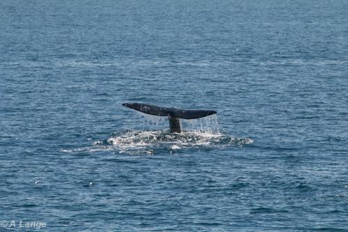 Sea Adventure 80  Whale & Wildlife Day Tours