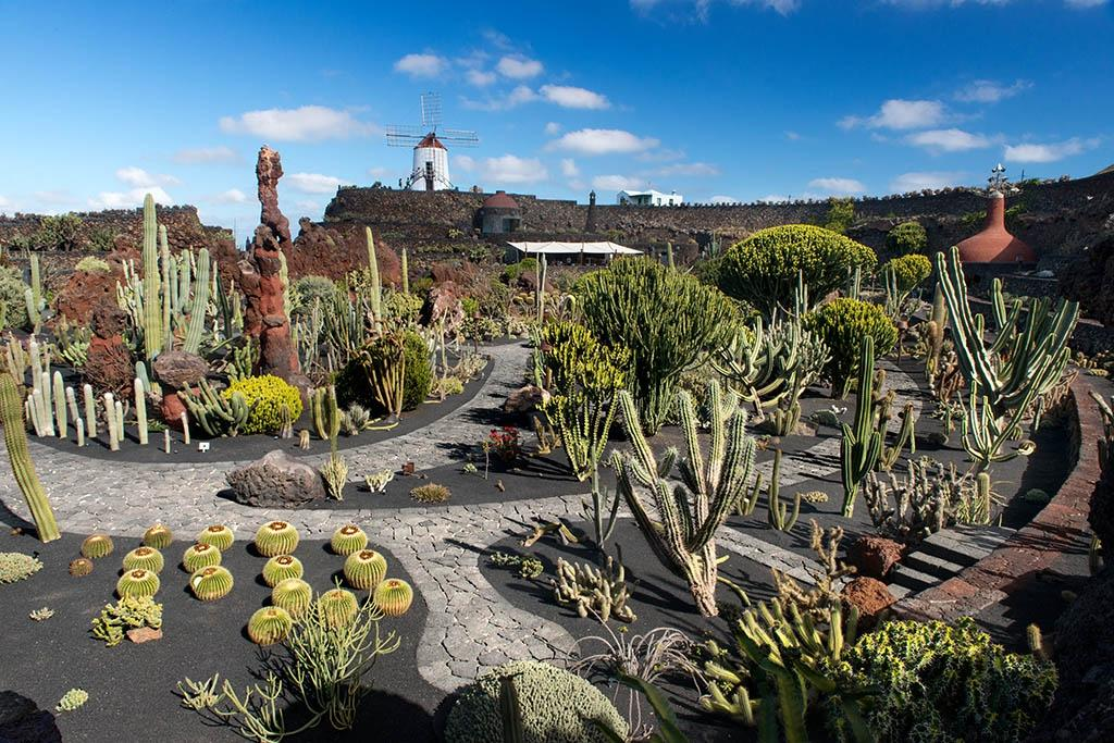 Jardin de cactus guatiza spain updated 2017 top tips for Au jardin des colibris tripadvisor