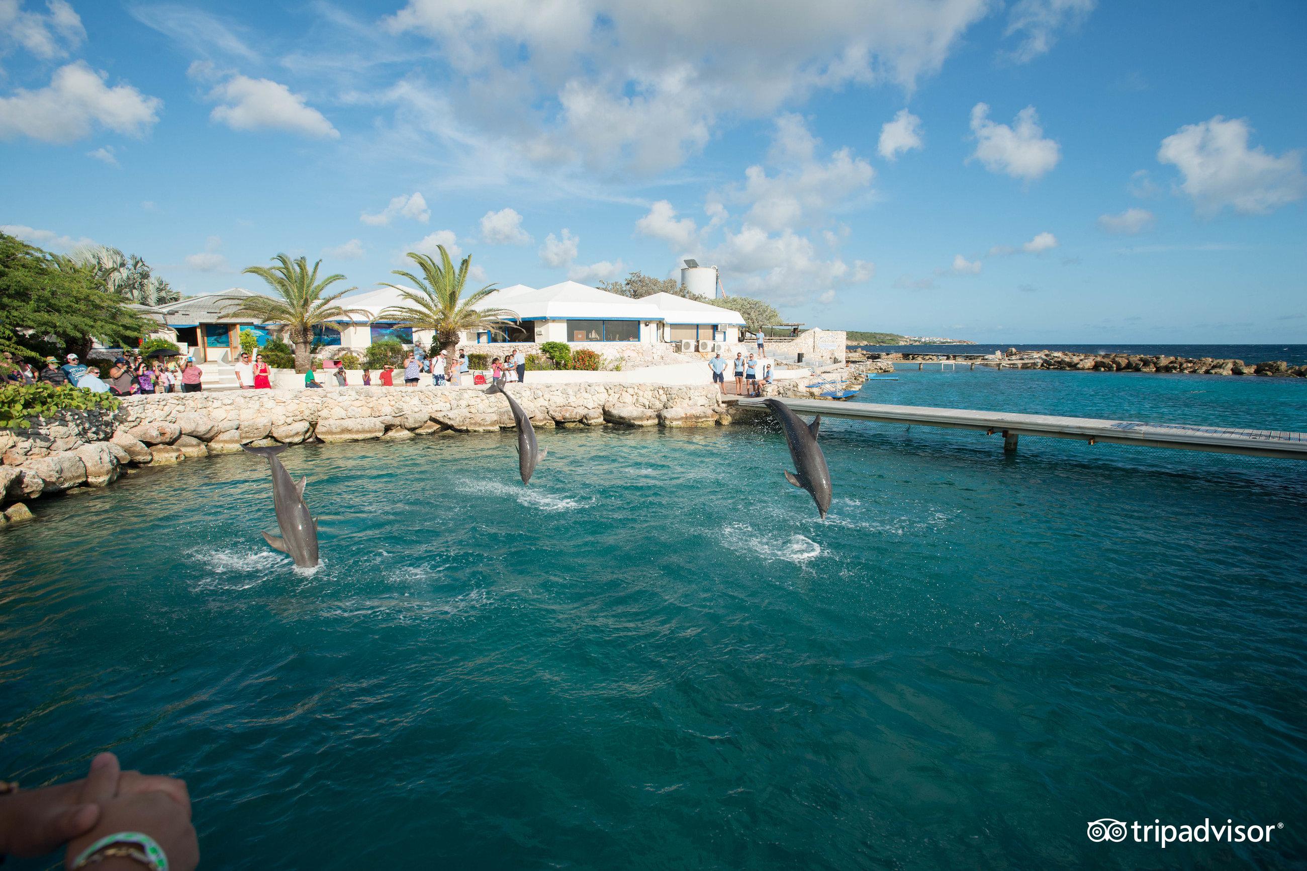 The Royal Sea Aquarium Resort Willemstad 2018 Review