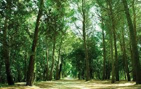 Parco Aiola