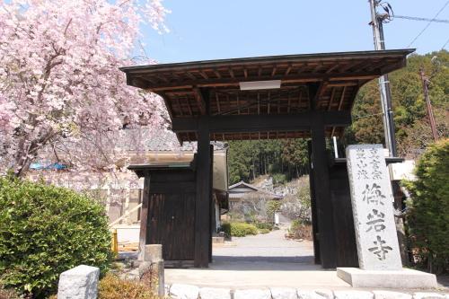 Baiganji Temple Shidarezakura