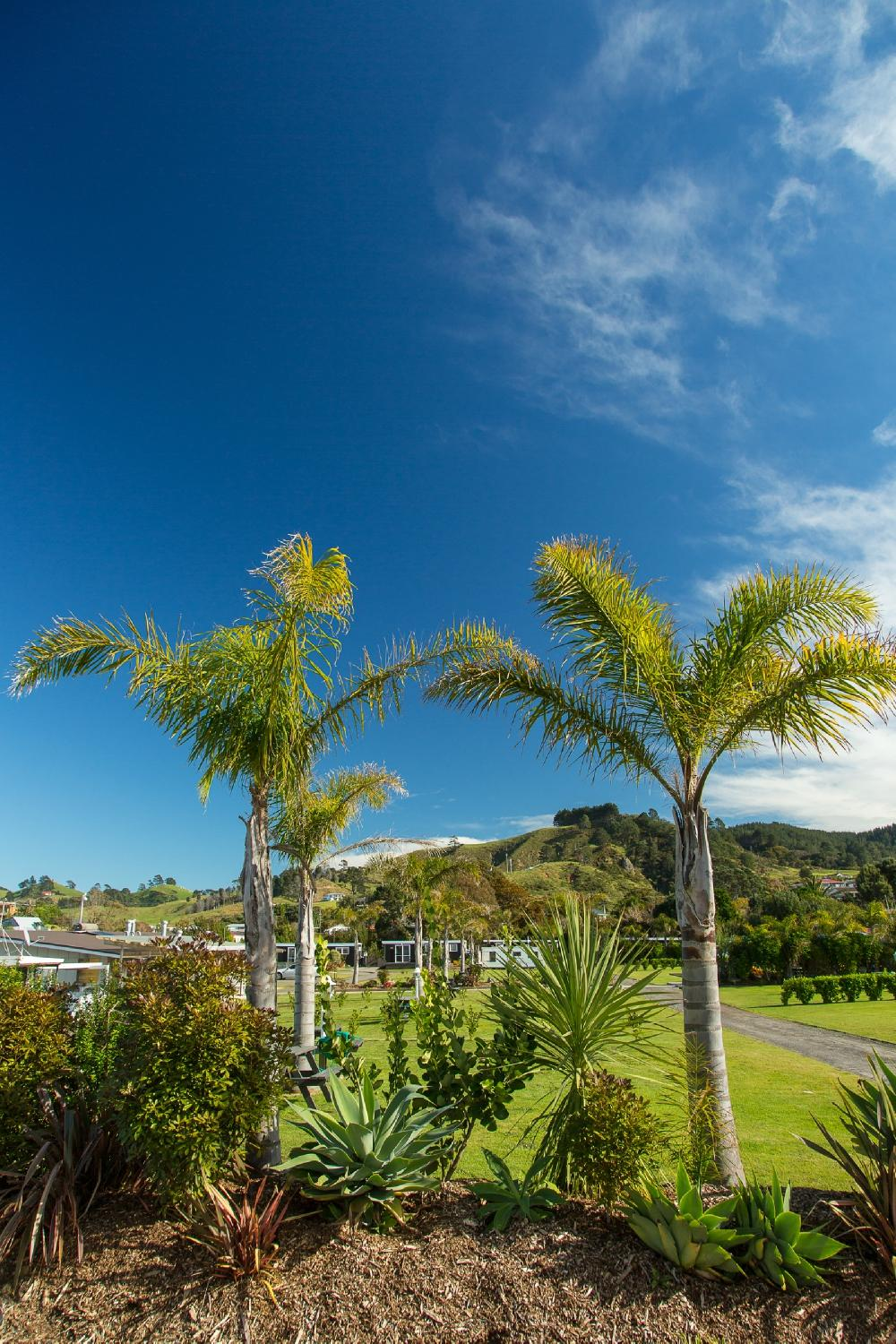 Waihi New Zealand  city pictures gallery : Beachaven Kiwi Holiday Park Waihi, New Zealand UPDATED 2016 ...