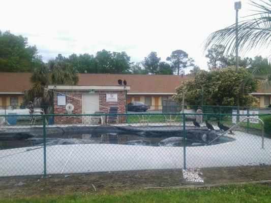 Knights Inn Hardeeville - UPDATED 2017 Motel Reviews & Price ...