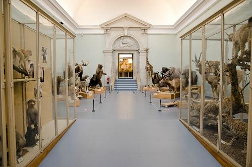Musee Cantonal de Zoologie
