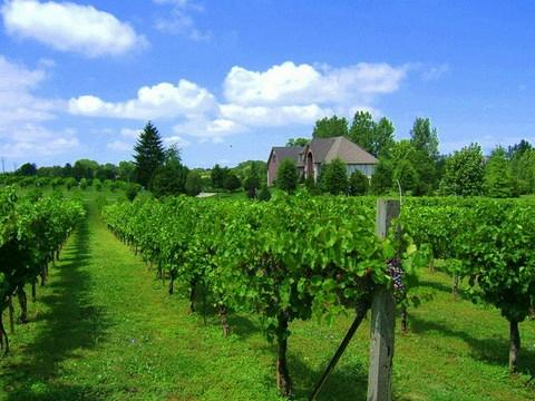 Valentino Vineyards