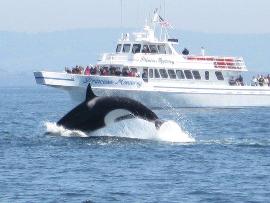 Monterey Sailing & Boat Charters