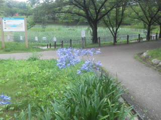 Hosoguchiike Park