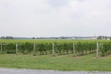 Crow Farm and Vineyard and Winery