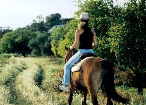 Drapia Horse Farm