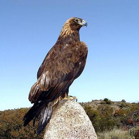 Zoological Monument The Nest of Golden Eagle