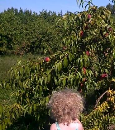 Valley View Orchards