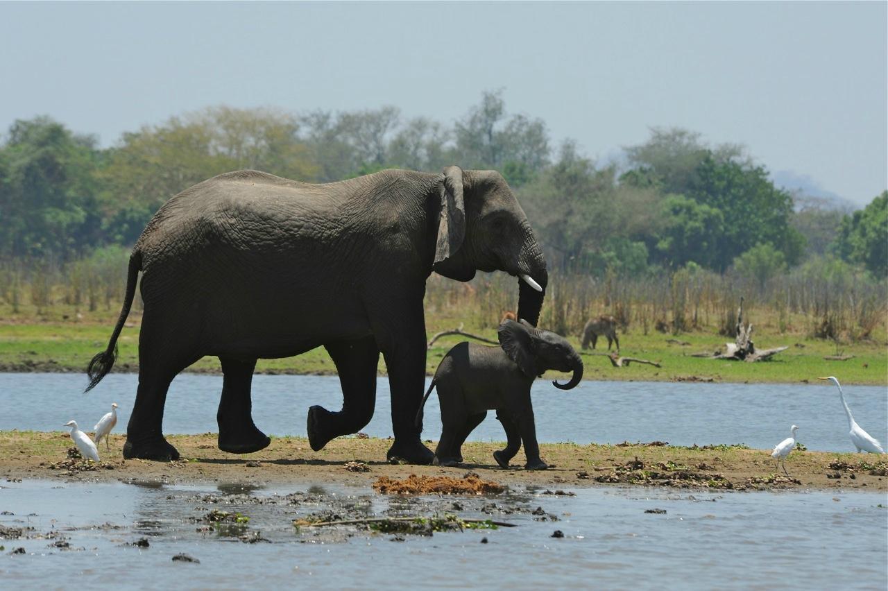 Central African Wilderness Safaris Mvuu Lodge