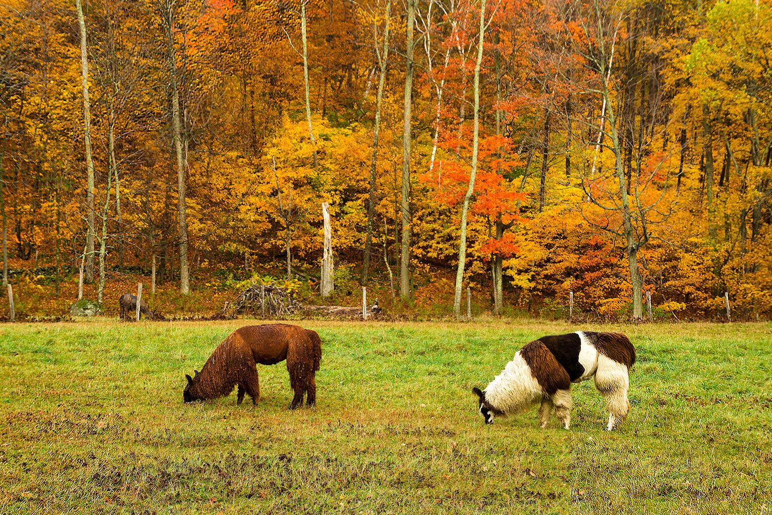 Fall Foliage | Vermont Tourism