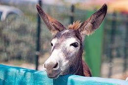 Donkey Sanctuary Bonaire