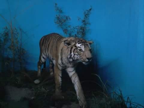 Museo Zoológico Dámaso Antonio Larrañaga