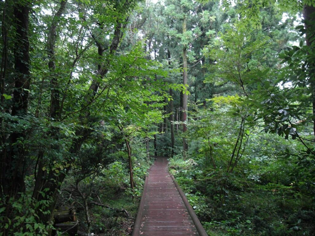 Seogwipo Natural Recreation Forest