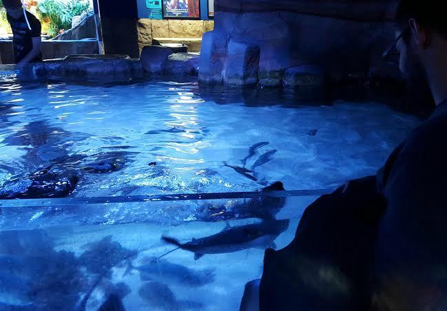 Portland Aquarium Milwaukie Or Top Tips Before You Go